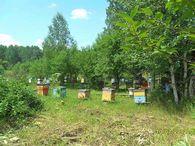 Препараты, содержащие мед и воск, которые производит фармацевтическая промышленность?