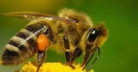 Как выбрать место для пасеки при кочевке с пчелами?