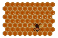 Может ли нанести пчелам вред ёж?