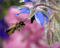Можно ли из семьи-воспитательницы отбирать пчел?