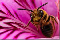 Можно ли работать с пчелами в перчатках