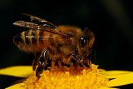 Какую пользу дает использование редьки с медом?
