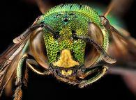 Как правильно сформировать гнездо для пчелосемьи на зиму?