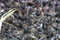 Какие условия необходимо создать пчелам для нормальной зимовки?