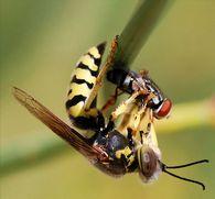 Как употреблять, мед при болезнях печени, желчного пузыря, селезенки?