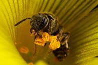 В чем суть промышленной технологии пчеловодства?