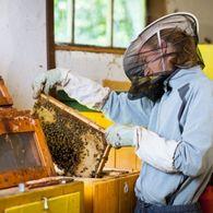 Как сформировать отвод с приучением пчел летать на два летка?