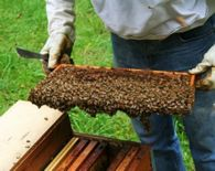 Какие используют пакеты пчел и какие требования к ним?