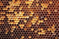 Насколько эффективен подогрев пчелосемей весной?