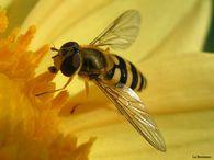Почему пчелы рождаются без крыльев?