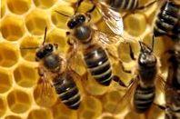 Подкормка пчел сахарным сиропом весной