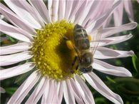 Полезно ли повышение концентрации углекислого газа в гнезде зимующих пчел?