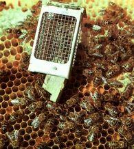 Какой основной инвентарь необходимый для осмотра пчел