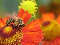 Каким требованиям должны соответствовать щеточки для сметания пчел с сотов и стенок улья