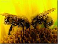 С какой скоростью перевозят пчел?