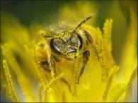 Какие основные методы разведения пчел?