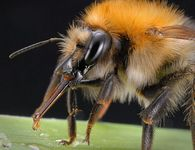 Какие изменения происходят в нектаре при переработке его пчелами?