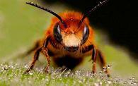 Сколько цветов посещают пчелы, чтобы собрать нектар для выработки 1 кг меда?