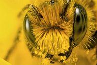 Характерные признаки заболевания пчел нозематозом?