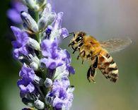За сколько дней нужно откачать мед?