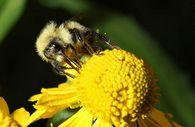 Что такое сотовый мед и как его получить?