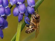 Виды планов, которые составляют в хозяйствах пчеловодческого направления?