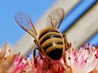 Какие матки и пчелосемьи подлежат выбраковке?