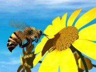 Какую роль играют кормовые запасы в зимнем клубе пчел?