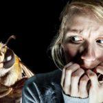 Как называется боязнь пчел