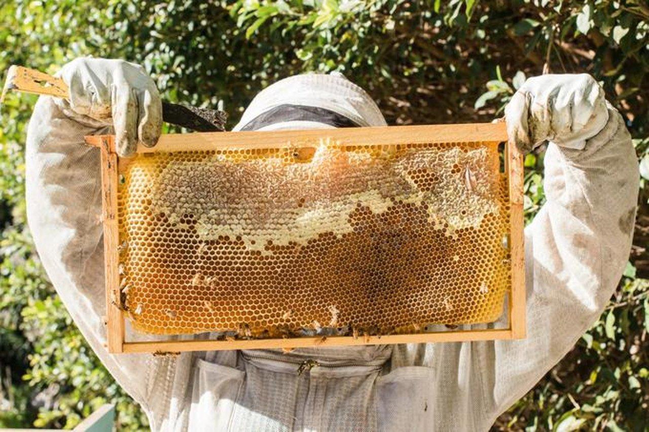 Необходимые условия для правильного хранения рамок меда