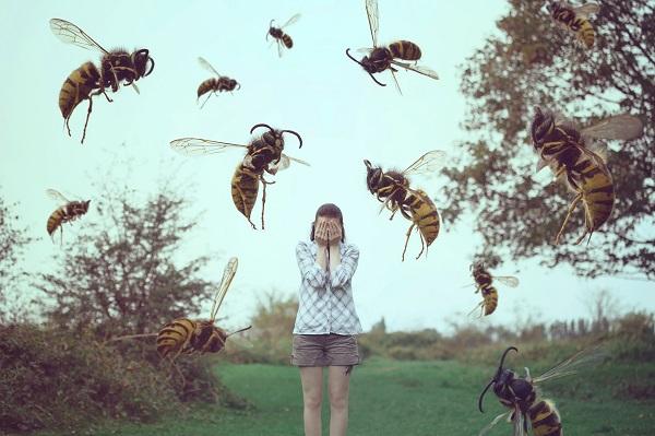Причины появления пчелобоязни