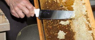 Забрус пчелиный полезные свойства